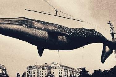 L'immagine rappresenta balena sollevata da una gru che richiama al conflitto interiore