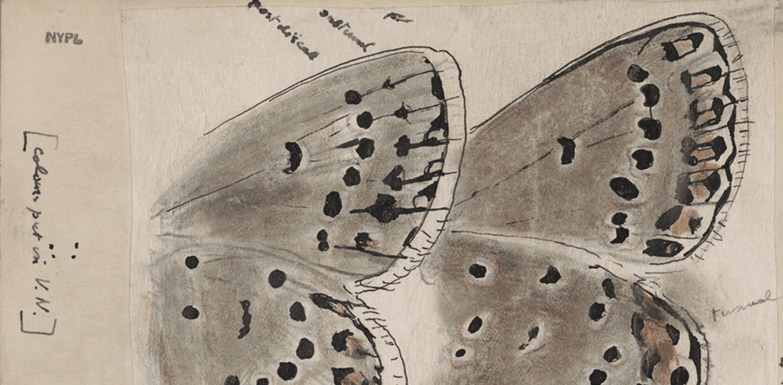 Farfalle disegnate