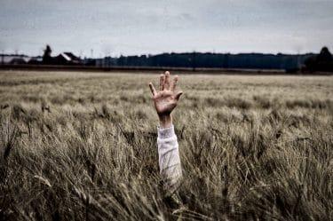 Braccio che emerge da un campo di grano che rappresenta la resistenza al fallimento e agli insuccessi